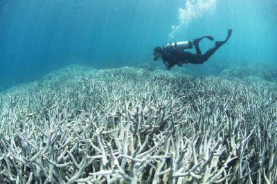 慢速西语:大堡礁35%珊瑚死亡:白化现象持续