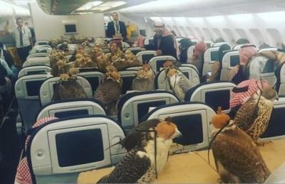 西班牙语阅读: 沙特富豪为老鹰买票坐飞机